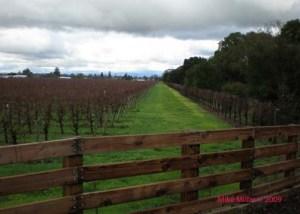 Vineyard view North from Santa Rosa Creek