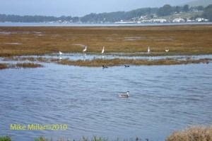Bodega Harbor Wetland