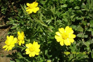 Helen Putnam Flowers