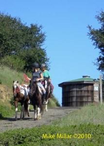 Helen Putnam Horses