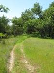 Road at Healdsburg Ridge