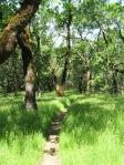 Healdsburg Ridge in the woods