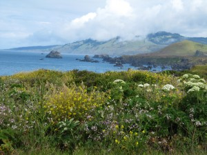 View up the Sonoma Coast with wildflowers