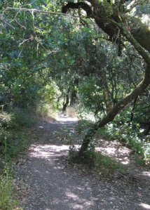 Shady Trail to Wolf House