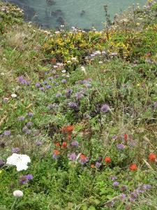 Cliffside garden