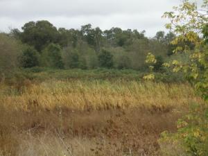 Overgrown pond near Sebastopol Community Center