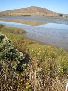 Incoming Tide at Sonoma Marin Marshes
