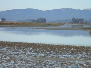 View Towards Marin from Sonoma Napa Marshes