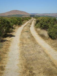 Hard Trail Sonoma Napa Marshes