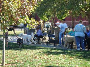 De Turk Dog Park Poodles