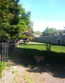 Badger Park