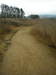 Path to Gray's Marsh - Ellis Creek Petaluma