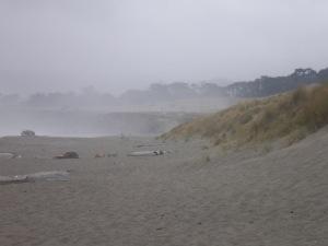 Thick Mist at Bodega Dunes