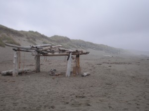 Driftwood big scale Bodega Dunes