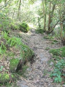 Bartholomew Park more rugged trail