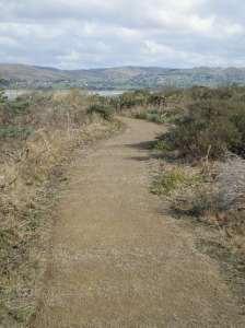 Wide New Trail at Bodega Head