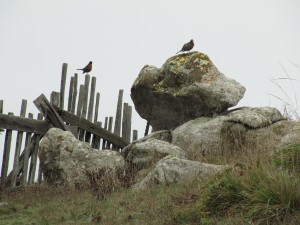 Fort Ross outcrop, fence and birds