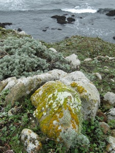 Fort Ross lichen covered rock