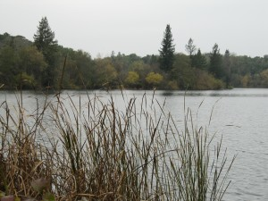 Spring Lake with reeds