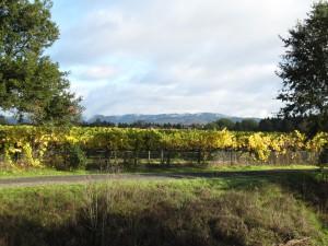 Vineyards looking North Santa Rosa Creek