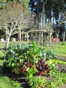 Vegetables at Ft Bragg Botanical Gardens