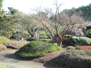 Ft Bragg Botanical Garden