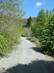 Uphill trail at Quarryhill