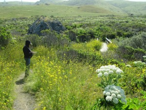 Cow Parsnip and Scouting Kortum Trail