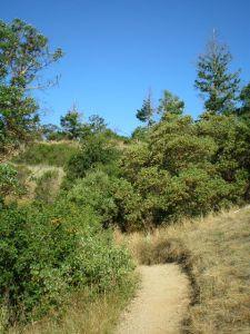 Annadel Trail