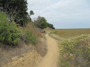 Trail at Turtle Back Hill