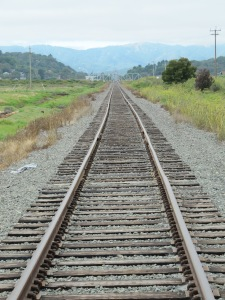 Cross the tracks at Sonoma Baylands