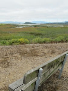 Bench with wetland view Sonoma Baylands