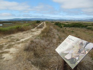 Looking back from trial end Sonoma Baylands