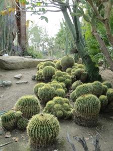 Moorten Botanical