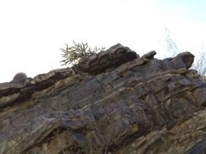 Palm Canyon rock