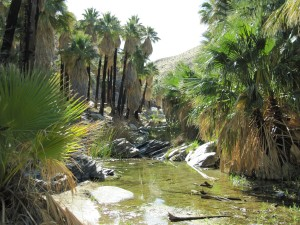 Palm Canyon Creek