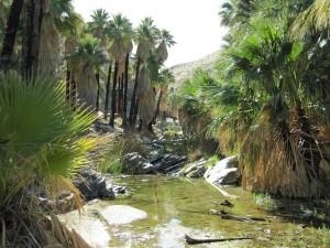 Palm Canyon Creek
