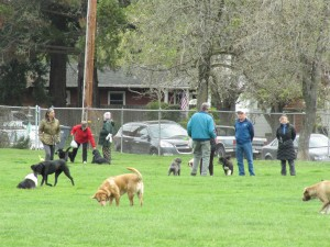 McNear Park Dog playtime