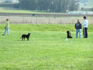 Wiseman Park Dogs run soccer field