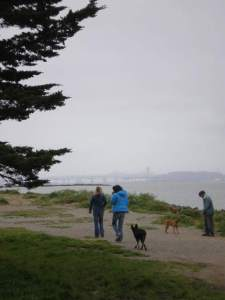 Dogs and Pt Isabel