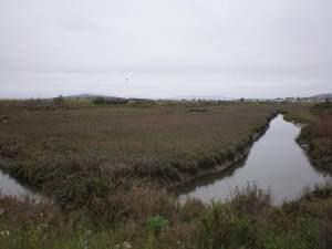 Wetlands Pt Isabel Regional Shoreline