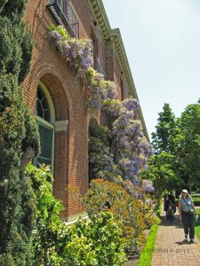 Filoli Mansion with Wisteria