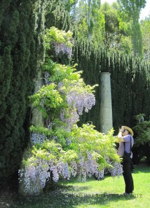 Filoli Photographers Delight