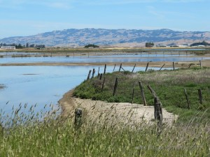 Rush Creek to Petaluma River