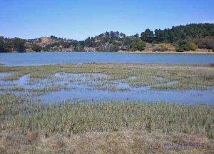 Richardson Bay View