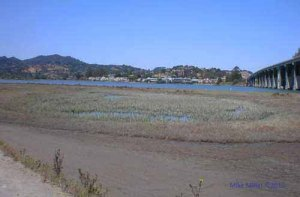 Tidal Marsh on Richardson Bay
