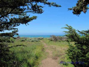 Gualala Pt Regional Park trail