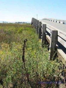 Hudeman Slough overpass