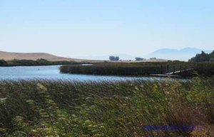 Suisun Slough view to Mt Diablo