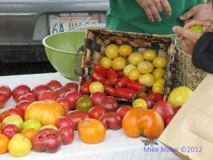 Tomatoes at Bodega Bay Farm
